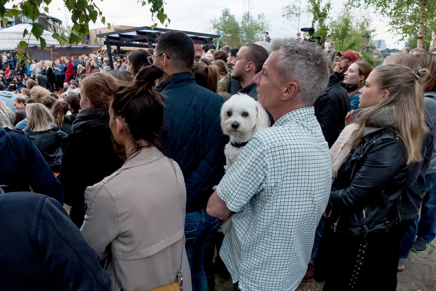 A dog and its owner observe the festivities.